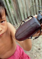 Fun Facts About the World's Biggest Beetle