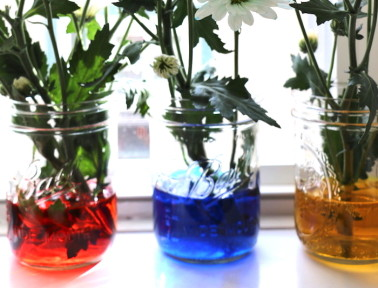 Spring STEM Fun with Flower Chromatography